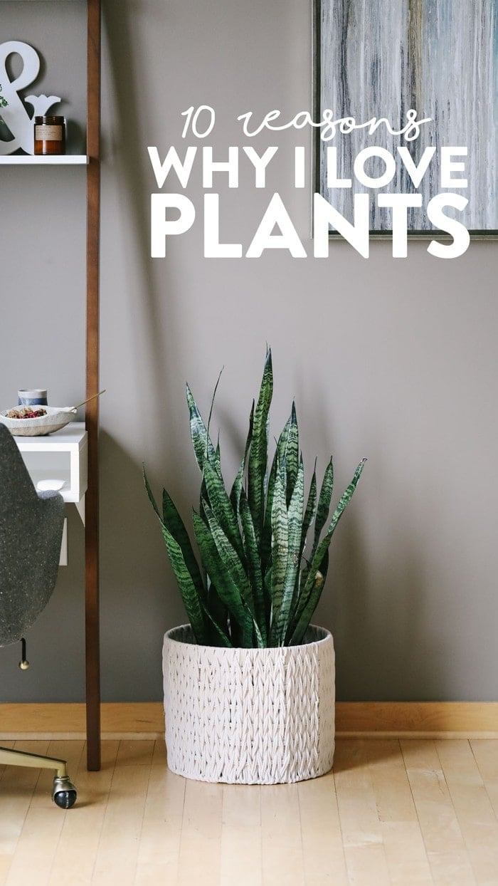 Plants make the world go round (literally) and I love them so much. Read all about the reasons why I love plants! In this post I also share which plants I have and how to take care of each one.