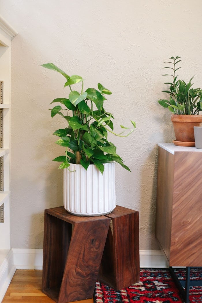 Best Indoor Plants for Beginners - Fit Foodie Finds