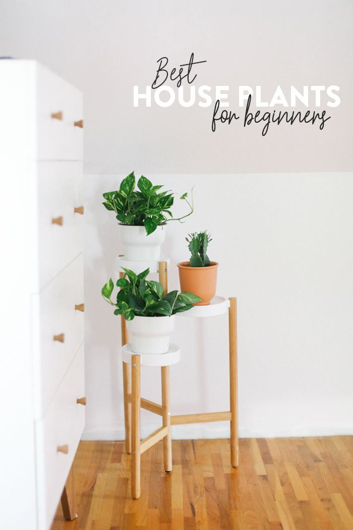 Best house plants for beginners