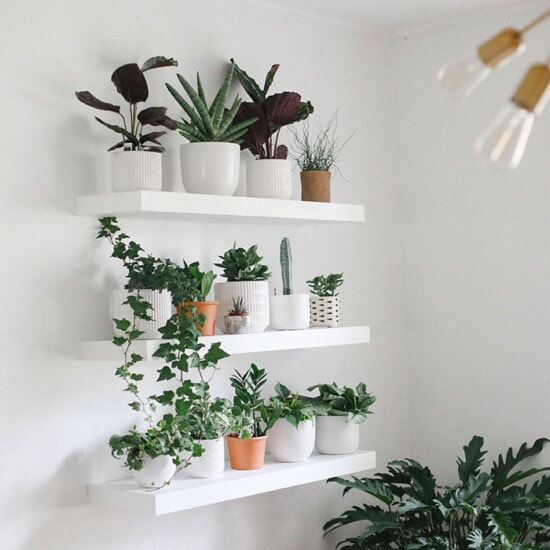 Looking to build a gorgeous, oxygen-filledplant wall in your home? This guide will teach you exactly how to do it. From how to space your shelves, to what plants to buy, we'll give you a step by step in building yourself an indoor living wall!