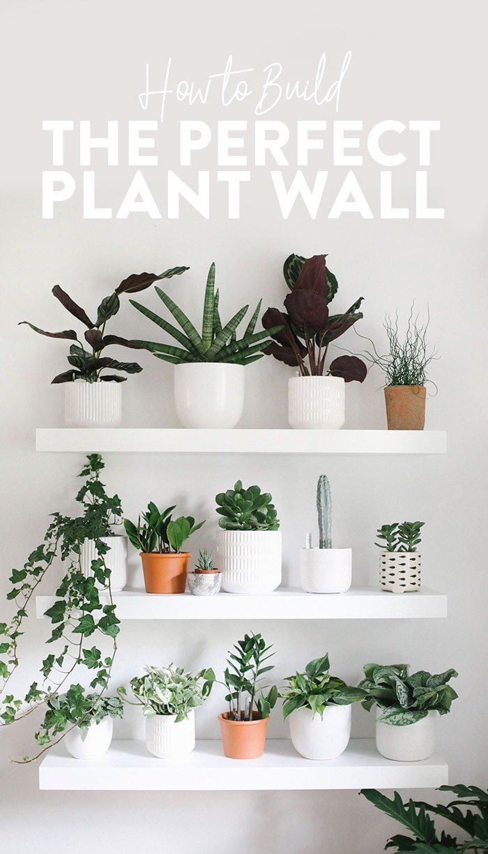 How To Build The Perfect Plant Wall Fit Foodie Finds