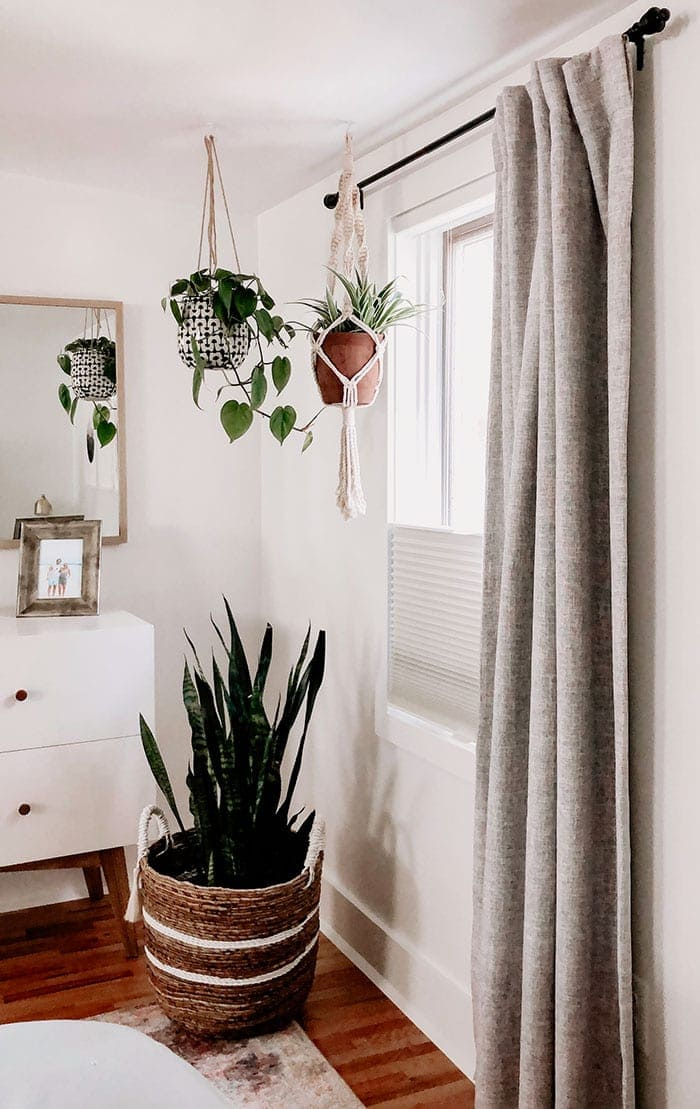 hanging plants near window